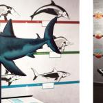 """""""Konvergenz von Delfin, Hai und Ichthyosaurier""""; Ausstellungsfotos2"""