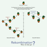 "Grafik_Rekombination"""
