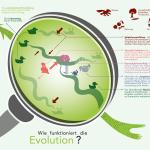"""Grafik """"WieFunktioniert die Evolution"""""""