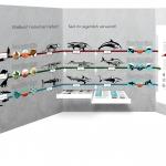"""""""Konvergenz von Delfin, Hai und Ichthyosaurier""""; Aufbau-Simulation 1"""