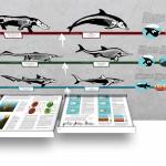 """""""Konvergenz von Delfin, Hai und Ichthyosaurier""""; Aufbau-Simulation: Schubladen"""