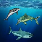 """""""Konvergenz von Delfin, Hai und Ichthyosaurier""""; Titelblatt der zugehörigen Dokumentation"""